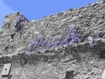 Festungsmauer mit Blumen  in Mystras bei Neu-Sparta, Peleponnes