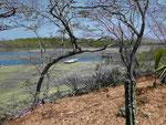 Beginn des Mangrovendeltas, Tamarindo, Pazifikküste, Costa Rica