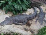Krokos im Zoo Leipzig
