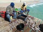 Fischer auf der Mole von Santa Maria, Sal, Kapverden