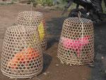 Gefärbte Kampfhähne auf Bali, Indonesien