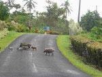 Auf der Strasse auf Westsamoa