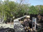 Mangrovenweg auf Curieuse, Seychellen