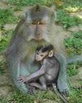 Im Affenwald auf Bali