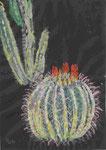 Jardin de Cactus; Lanzarote
