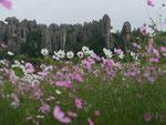 Im Steinwald bei Kunming, Volksrepublik China