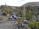 Blick auf den Jardin de Cactus, Lanzarote