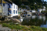 Polperro/Cornwall