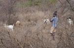 Ziegenhüter in Kenia
