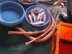 Seltene Meeresfische in Osttaiwan