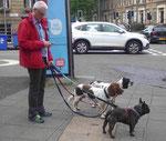 Hundeausführer in Glasgow, Schottland