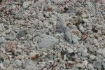 Muschel-und Korallenboden in Französisch Polynesien