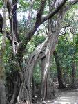 Im Regenwald von Costa Rica