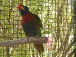 Papageienvogel im Minizoo auf Porto Santo, Portugal