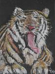 Tigerkätzchen