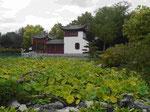 Lotosteich im Chinesischen Garten in Montreal, Quebec, Kanada
