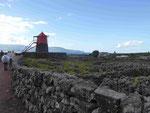 Windmühle im Weinfeld auf Pico, Azoren