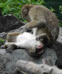 Affen im Berliner Tierpark