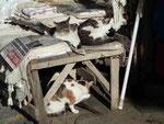 Sich putzende Katzen in Serince, Türkei