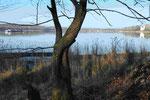 Havelblick mit Pfaueninsel