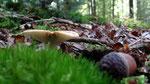 Van alles te zien op de bodem van een bos.