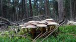 Bosje paddenstoelen in het bos.