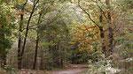 Mooie dreef in het bos.