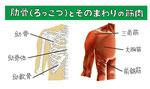 肋骨と筋肉