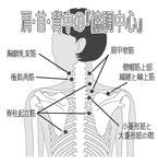肩 首 背中 協調中心