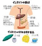 インスリンの働き 分泌