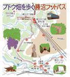勝沼ブドウ畑フットパスマップ