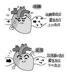 心臓 血圧 収縮 拡張