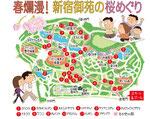 新宿御苑桜マップ