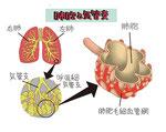 肺胞 気管支