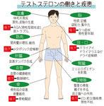 テストステロンの働きと疾患