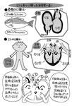 人と魚の心臓と血液循環の違い