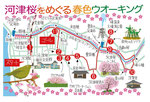 河津桜ウォーキングマップ
