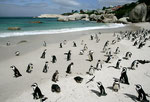 Boulders Beach, Cape Town, Südafrika