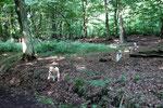 Zurück im Wald...