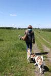 Sonniger Frühlings-Spaziergang über weite Wiesen ...