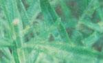 nachbarsgarten 2   2014  Alu Dibond  30x18,5 cm