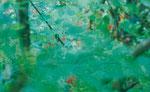 nachbarsgarten 1  2014  Alu Dibond  30x18,5 cm