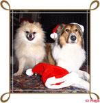 Weihnachten auf der Boro- Ranch, mit Gasthund Chica :)