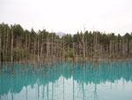 美瑛町「青い池」(正面に十勝岳)