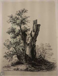 Charmier 8, Le gros arbre coupé, s.d. (BM Lyon, Res Est 28211)