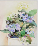 Hortensien I   Bildgrösse    83  x 61  cm