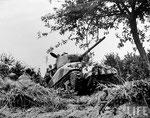 Sherman -Rhinozerus-