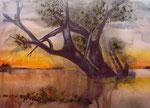 Baum am Chobe, Aquarell, 47x31cm, gerahmt, 580,00 Euro