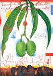 Dürers Eier, oder-Albrecht hat grüne Mangos nicht gemalt  30X42cm, Aquarell, Tusche auf Papier, 2005