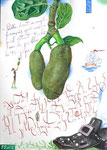 Verdammt! sagte der französische Seefahrer, als der weiße Saft der Jakfrucht seine Schuhe befleckte  30X42cm, Aquarell, Tusche auf Papier, 2005
